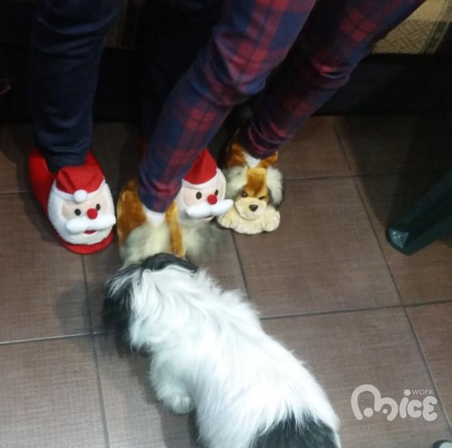 3 dogs & 2 small Santas